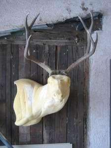 MULE DEER RACK antlers whitetail moose elk taxidermy mount sheds craft