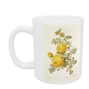 Rosa Sulfurea (Yellow Rose) from Les Roses by Claude Antoine Thory