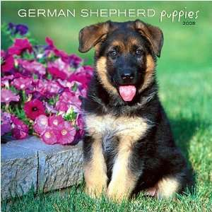 German Shepherd Puppies 2008 Wall Calendar Office