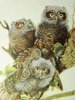 Vintage 1981 Baby Screech Owls Bird Animal Print, Jim Oliver, Sig