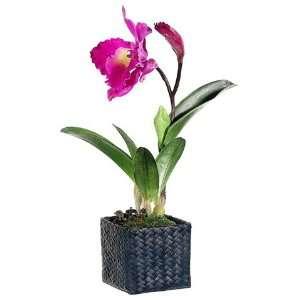 Orchid Silk Flower Arrangement  Purple (case of 4) Home & Kitchen